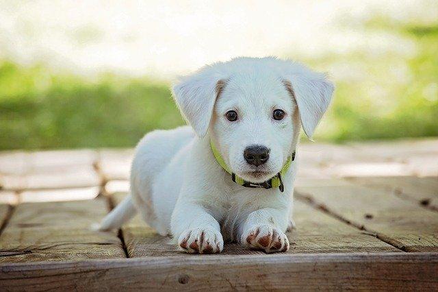 ochrona trawnika przed psem